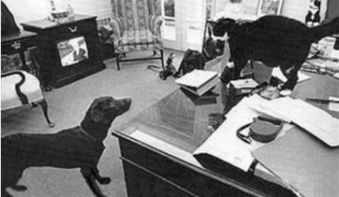 Labrador saves White House